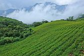 六十石山の金針花季。:IMG_10523.jpg
