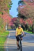 櫻。滬尾櫻花大道:IMG_14766.jpg