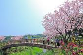 櫻。三生步道:IMG_8378.jpg