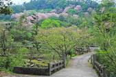 櫻。陽明山:IMG_8758.jpg