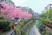 櫻。希望之河:IMG_8372.jpg