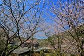 櫻。橘咖啡:IMG_12908.jpg
