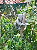 遊。木柵動物園:IMG_0010.jpg
