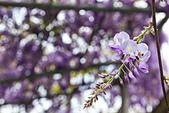紫藤の恋。:IMG_3335.jpg