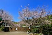櫻。橘咖啡:IMG_12909.jpg