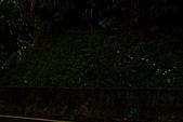 夜。螢火蟲:IMG_9687.jpg