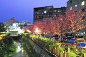 櫻。希望之河:IMG_8500.jpg