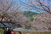 櫻。橘咖啡:IMG_12913.jpg