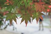 秋の福壽山。:IMG_6195.jpg