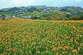 六十石山の金針花季。:IMG_10577.jpg