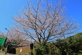 櫻。橘咖啡:IMG_12920.jpg