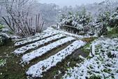 雪。陽明山:IMG_7238.jpg