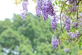 紫の浪漫。:IMG_8588.jpg