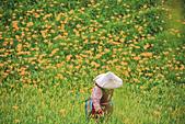 六十石山の金針花季。:IMG_10510.jpg