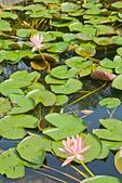 植物園。:IMG_4216.jpg
