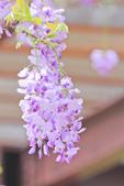 紫の浪漫。:IMG_8590.jpg