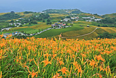 六十石山の金針花季。:IMG_10518.jpg