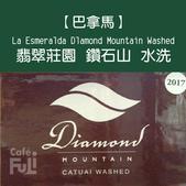 麻袋生豆:2017紙盒編排-綠.jpg