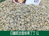 生豆照:果丁丁