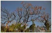 2015.01.05白沙岬燈塔+三義+海邊:DSC_1480S.jpg