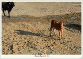 八里+白沙岬...和我家小妹閒拍:DSC_3759.jpg