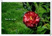 到三義阿公家過年--女兒的作品 BY FUJI  S-602 ZOOM:DSCF0015.JPG