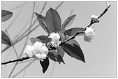 板橋林家花園-FUJIFILM X20:DSCF7557.JPG