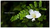 拜訪桐花:DSC_7656.jpg