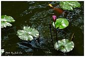 板橋林家花園-FUJIFILM X20:DSCF7640.JPG