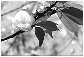 板橋林家花園-FUJIFILM X20:DSCF7558.JPG