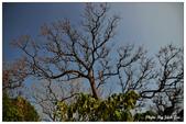 2015.01.05白沙岬燈塔+三義+海邊:DSC_1477S.jpg
