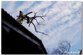 單車北橫-破病落跑之旅-回家的路上 by FUJI HS-20:DSCF4765.jpg