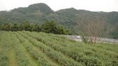 咖啡天地間:2011年11月6日坪林南山寺-喝咖啡去