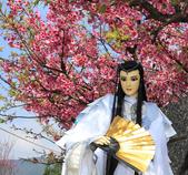 櫻花:陽明山平等里的櫻花4.jpg