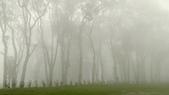 老樹農地:迷霧森林@老樹