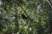 小百岳都蘭山:發現猴蹤
