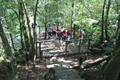金瓜寮溪魚蕨步道:觀魚觀鳥平台