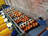 本站人氣百萬誌喜:A2水果洗選機1.JPG