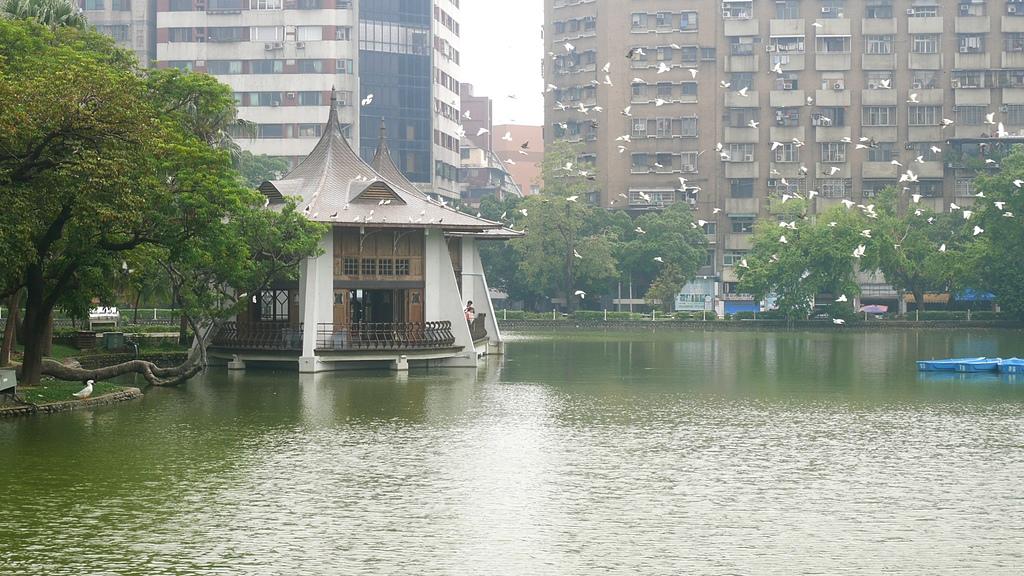 魚游鳥飛一幅安祥景像 - 台中公園 砲台山