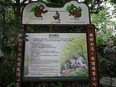 天母古道登紗帽山:05台灣獼猴.jpg