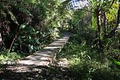 小百岳都蘭山:木板小橋