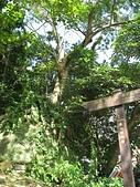 大湖公園白鷺鷥山:06立足巨石上的無患子.jpg