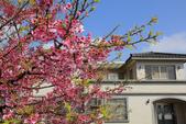 櫻花:陽明山平等里的櫻花2.jpg