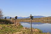 本拿比湖公園(Burnaby Lake Regional Park):09人工鳥巢.JPG