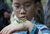 虎頭山公園賞蝶:螳螂2