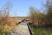 本拿比湖公園(Burnaby Lake Regional Park):10架空的木棧道.JPG