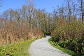 本拿比湖公園(Burnaby Lake Regional Park):11步道一景.JPG