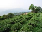 松蘿湖(一):00沐浴晨曦中的玉蘭茶園.jpg
