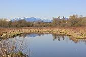 本拿比湖公園(Burnaby Lake Regional Park):12湖景之1.JPG