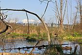 本拿比湖公園(Burnaby Lake Regional Park):13沼澤地.JPG